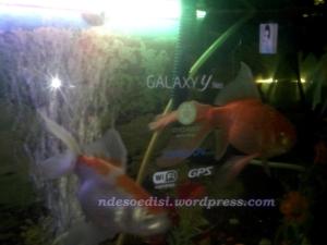 akuarium canggih 2