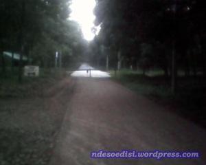 jalan utama di cor, jalur diarahkan ke kiri, masuk kebun karet