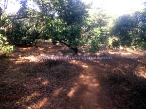 Meliuk-liuk disela-sela pohon rambutan :mrgreen: