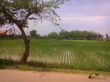 jalan alternatif Purwakarta (13)