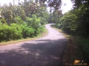 jalan berkelok di tengah kebun jati